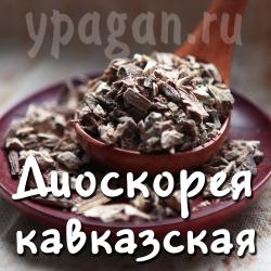 Диоскорея кавказская корень 50 гр