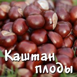 Каштан конский плоды 100 гр