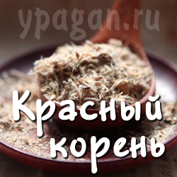 Красный корень (копеечник) 50 гр