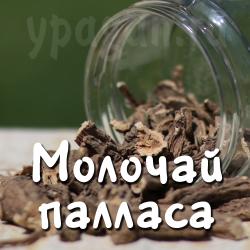 Молочай палласа корень 10 гр