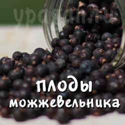 Можжевельник плоды 100 гр