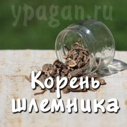 Шлемник байкальский корень 50 гр