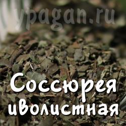 Соссюрея трава и цвет 50 гр